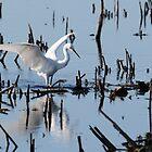 Snowy Egret by bozette