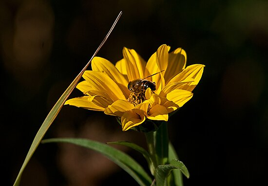 Sunny Honey by Mike Oxley