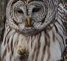 Wise One by Bill McMullen