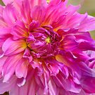 Dahlia - Dancing In The Sun by Kay M Gregan