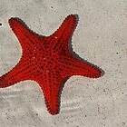 Scarlet Starfish by Keith Lightbody