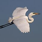 Great Egret by Keith Lightbody
