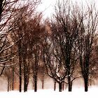 Winter's Austerity  by KatMagic Photography