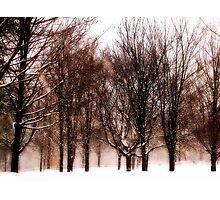Winter's Austerity  Photographic Print