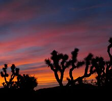 Day Break in Joshua Tree National Park by Angel LaCanfora