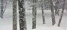 Snow-Squall -- While Walking In The Woods by T.J. Martin