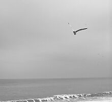 Gliding: Master Of The Sky And Sea by Lorna81