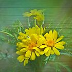 Yellow Daisy by BoB Davis