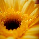 yellow rays of life by mirissa