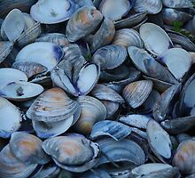 Oyster Shells by Paulette1021
