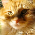 Orange Cat in Sun and Shade by ingridthecrafty