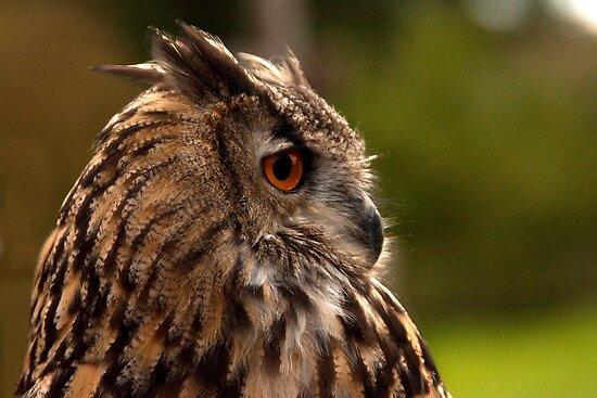 Eagle Owl by Nicholas Jermy