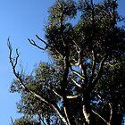 Tree #2 by Jodie Bennett