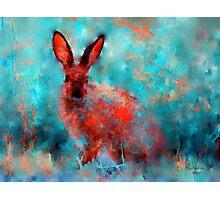 wild rabbit Photographic Print
