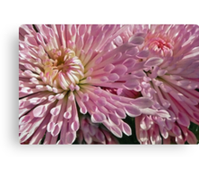 A Burst of Pink Canvas Print