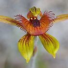 Bee Orchid by Keith Lightbody