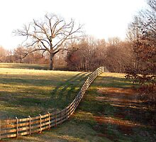 The Tree Corral  by BCallahan