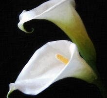Elegant Calla Lily Flowers 4 Painterly by Christopher Johnson