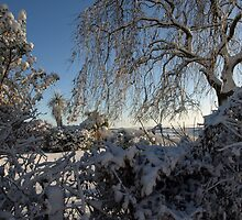 Soft snow laden garden shrubs and trees by moor2sea