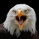 Screaming Eagle by Mark Hughes