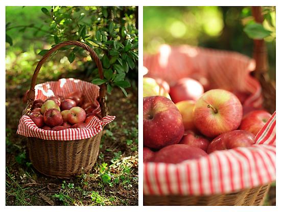 An Apple Affair by Hirondelles