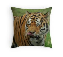 Licking His Lips, A Tigers Supper Throw Pillow
