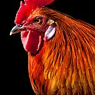 Rooster Pride by Janet Fikar
