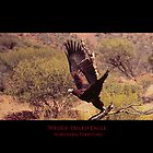 Wedge-tailed Eagle by Tony Peri