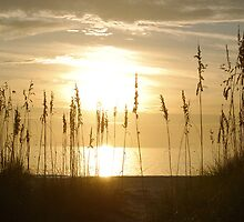 Sunset through sea oats 2 by Ben Waggoner
