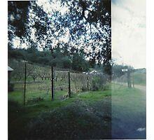 vineyard. Photographic Print