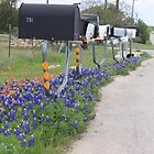 Bluebonnets, Indian Paintbrush and Mailboxes by Robert Armendariz
