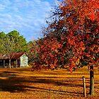 Hidden Country Charmer by Dawn di Donato