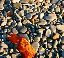 Belliveau Cove, Kelp and Pebbles by David Davies