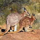 Skippy - Mother and Joey. by Alwyn Simple