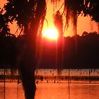 Louisiana Sunset #1 by Jamie  Armbruster