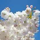 Spring Blue Sky Pastel Pink White Tree Blossoms Baslee Troutman by BasleeArtPrints