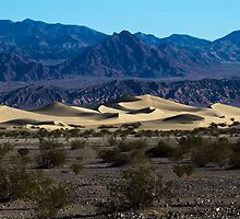 Moring at the Sand Dunes by Trudy LeDoux