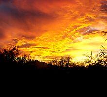 A Flaming Firebird Sunset by Marc Sandin