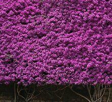 flowers on a church wall by Kristina Perenyiova