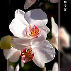 Beauty by imagic