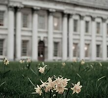 Desaturated Daffodils by monkeypolice