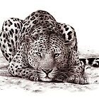 Leopard by soffee12