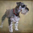 Snowball Dog by Kay Kempton Raade
