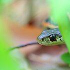 Peek-a-boo by LAaustin
