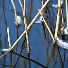 Abstract with reeds and feathers (2) by Javimage