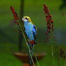 Beautiful Bird having Breakfast by Cathie Trimble