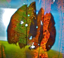 Bold leaves 1 by Howard Gwynne