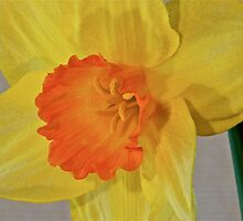 A Burst of Yellow by Jacqueline Hill