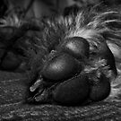 Póg's Paws by Trish  Anderson