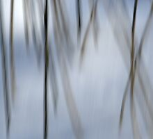 Dancing Twigs by Heather Pickard
